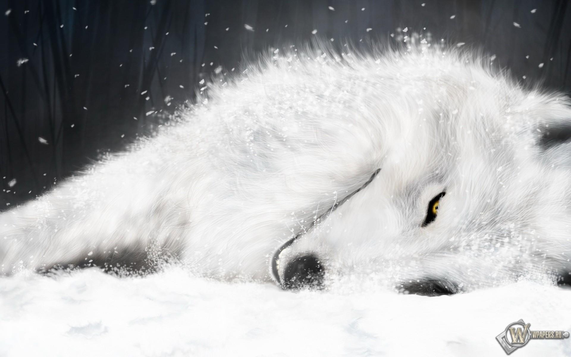 Волк отдыхает 1920x1200