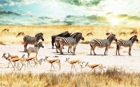 Обои Зебры в саванне: Небо, Саванна, Зебры, африка, Зебры
