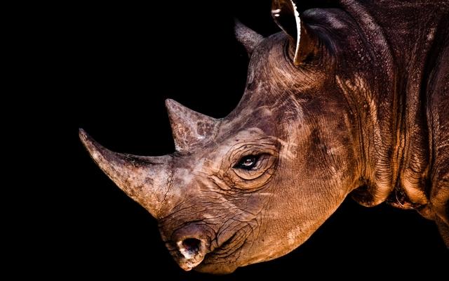 Носорог