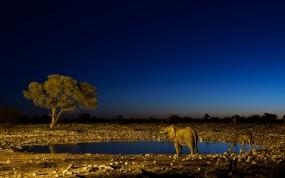 Обои Слон и жираф на водопое: Ночь, Слон, Жираф, Водопой, Прочие животные