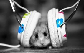 Обои Хомяк в наушниках: Музыка, Наушники, Хомяк, Прочие животные