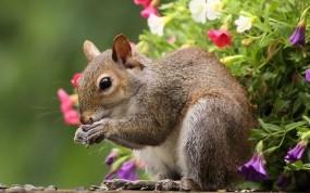 Обои Весенняя белка: Цветы, Белка, Весна, Прочие животные