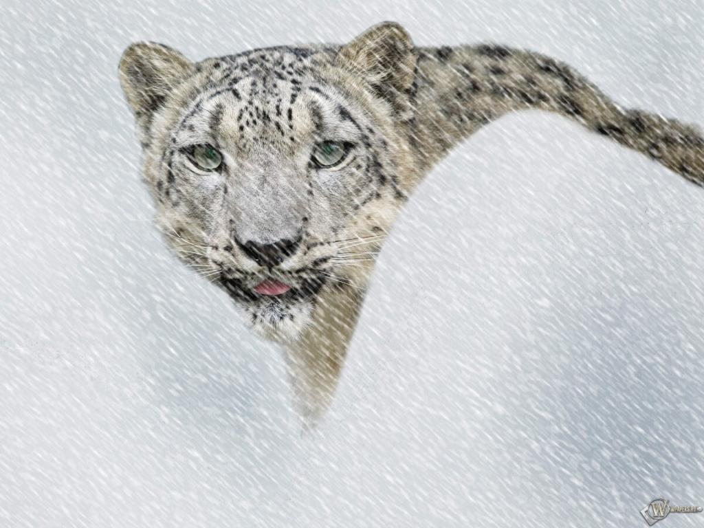 Ирбис снежный барс 1024x768