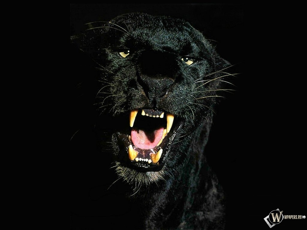 Черная Пантера 1024x768