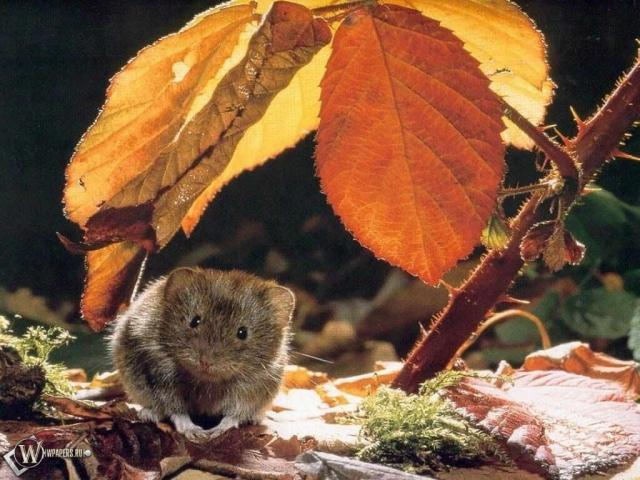 Мышонок под листом