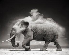 Обои Слон: Пыль, Ч/б, Слон, Прочие животные