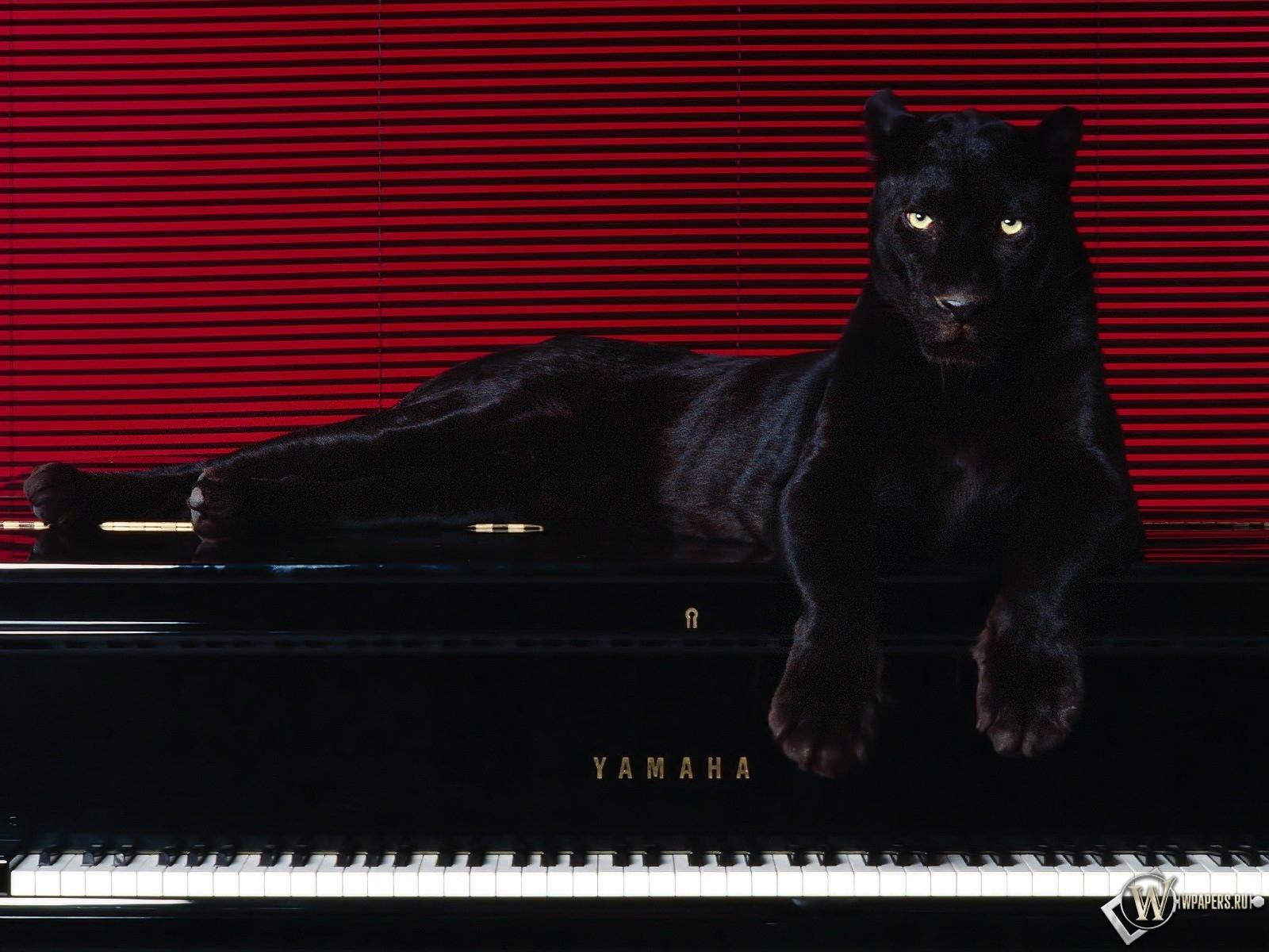 Пантера на рояле 1600x1200