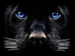 Обои Рисованная пантера: Усы, Пантера, Обработка, Прочие животные