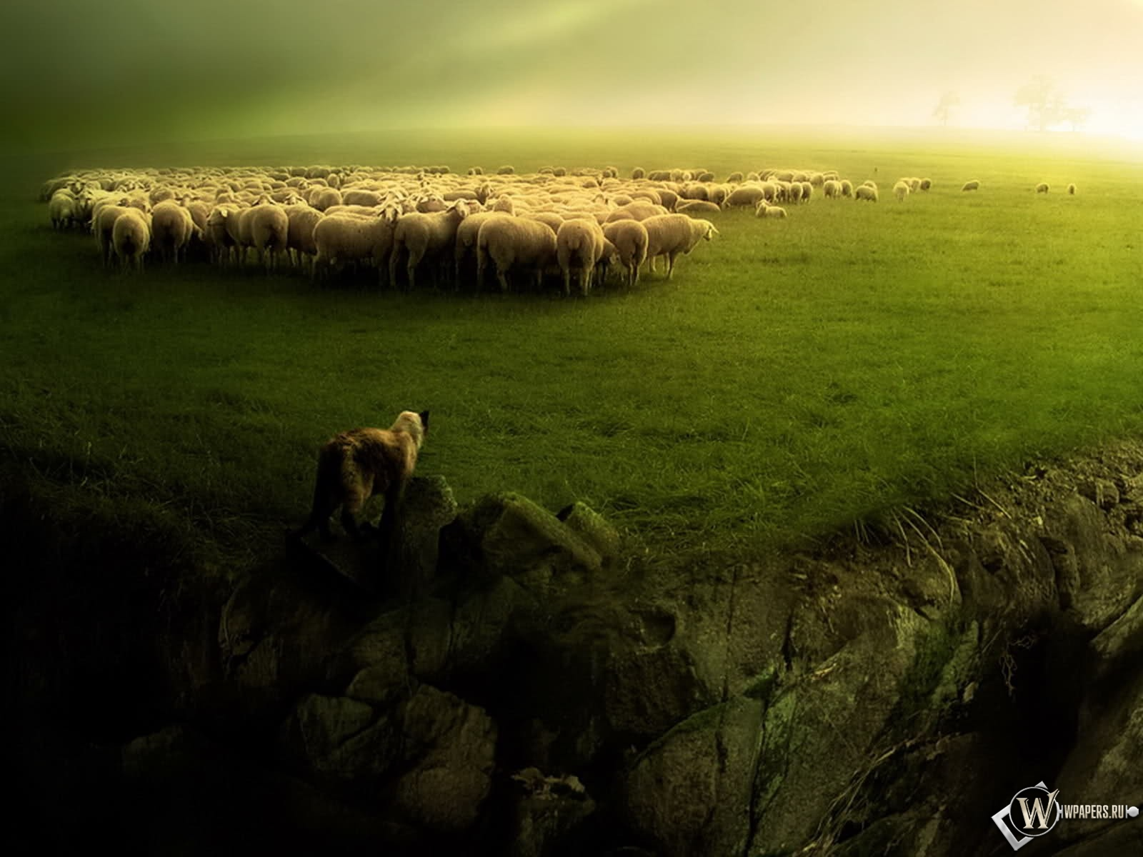 Волк и овцы 1600x1200