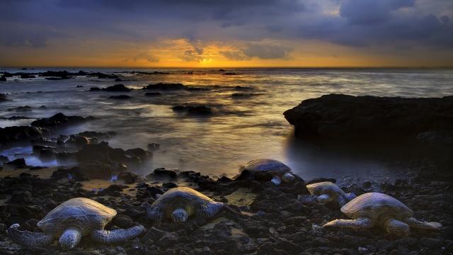 Черепахи на берегу