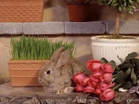 Обои Зайчик с цветами: Цветы, Розы, Кролик, Зайцы