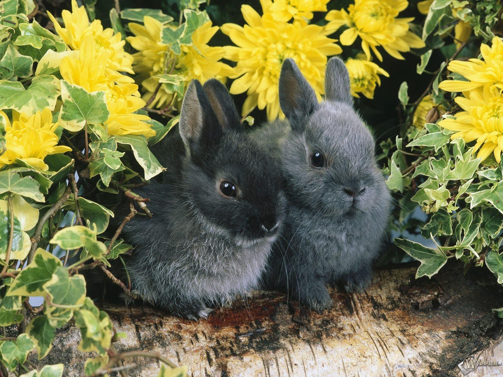Два черных кролика 1600x1200