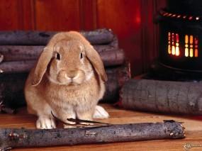 Обои Кролик и бревна: Камин, Кролик, Дрова, Зайцы