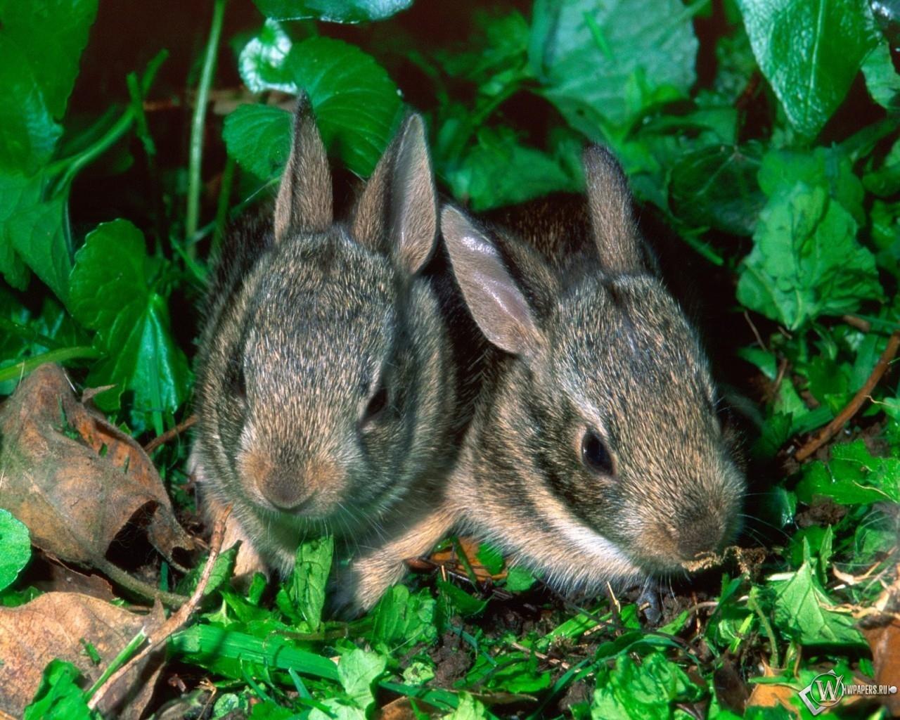 Парочка крольчат 1280x1024