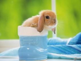 Обои Крольчонок в стакане: Стакан, Кролик, Зайцы