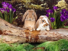 Обои Два братца-кролика: Братья, Кролики, Зайцы