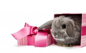 Обои Подарочный кролик: Подарок, Кролик, Зайцы