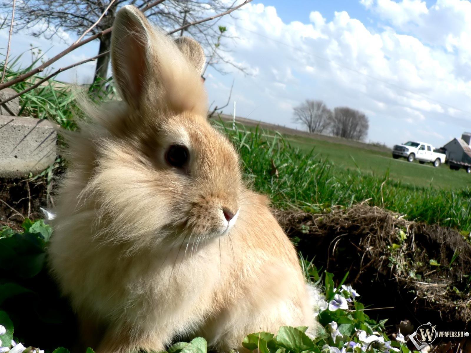 Заяц на лугу 1600x1200