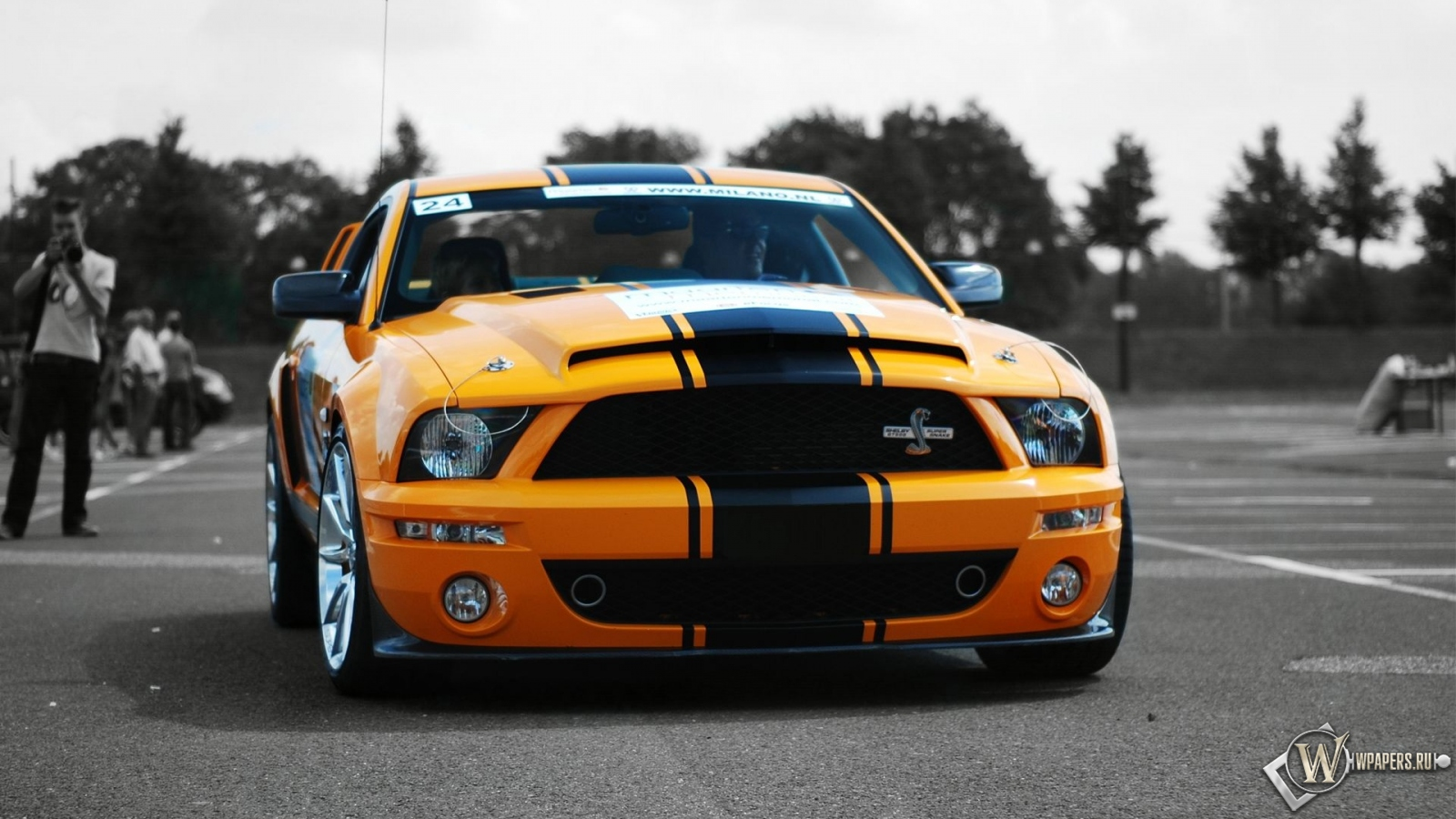 Обои ford mustang shelby gt500 super snake ford mustang shelby