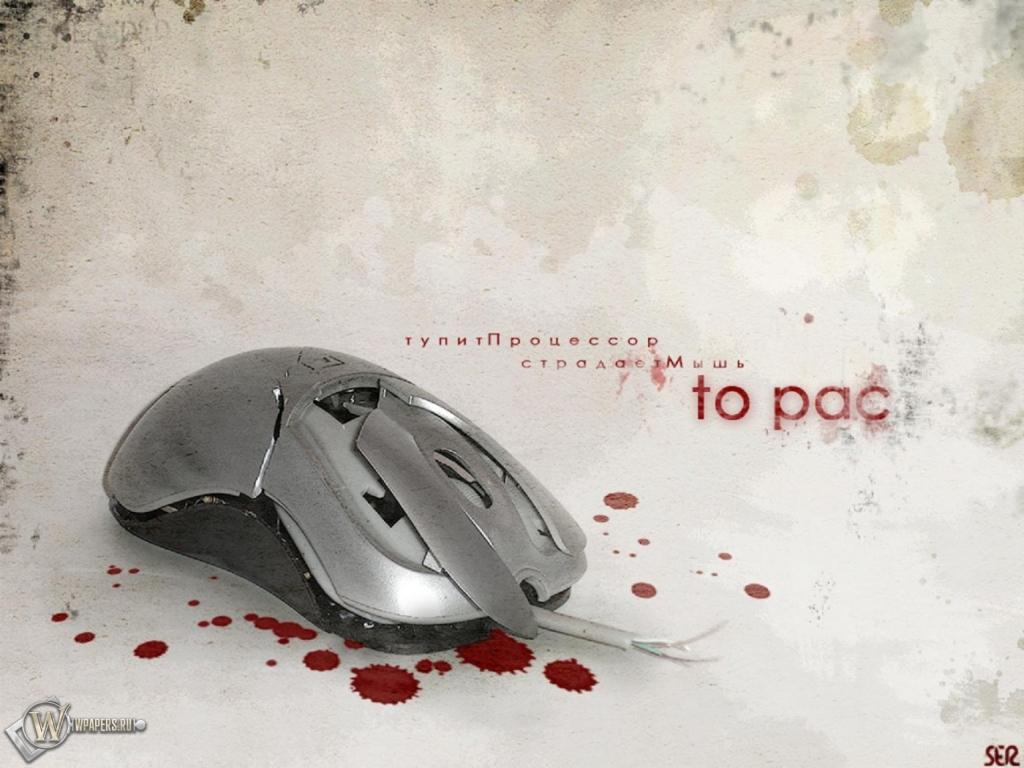 Обои мышь кровь мышь юмор прикол