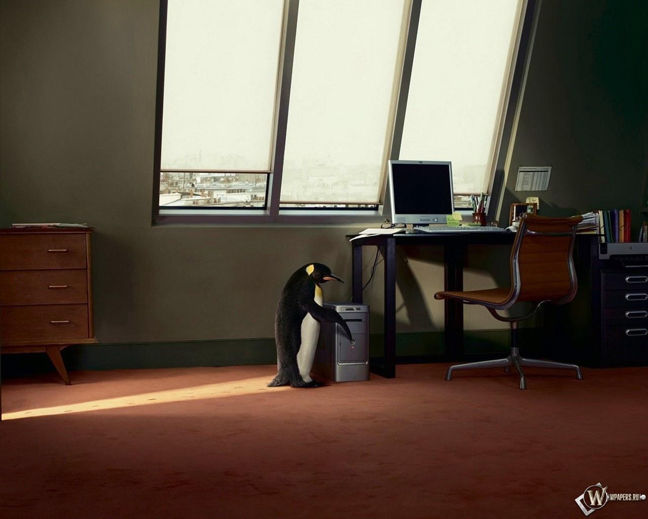 Пингвин в офисе 1280x1024