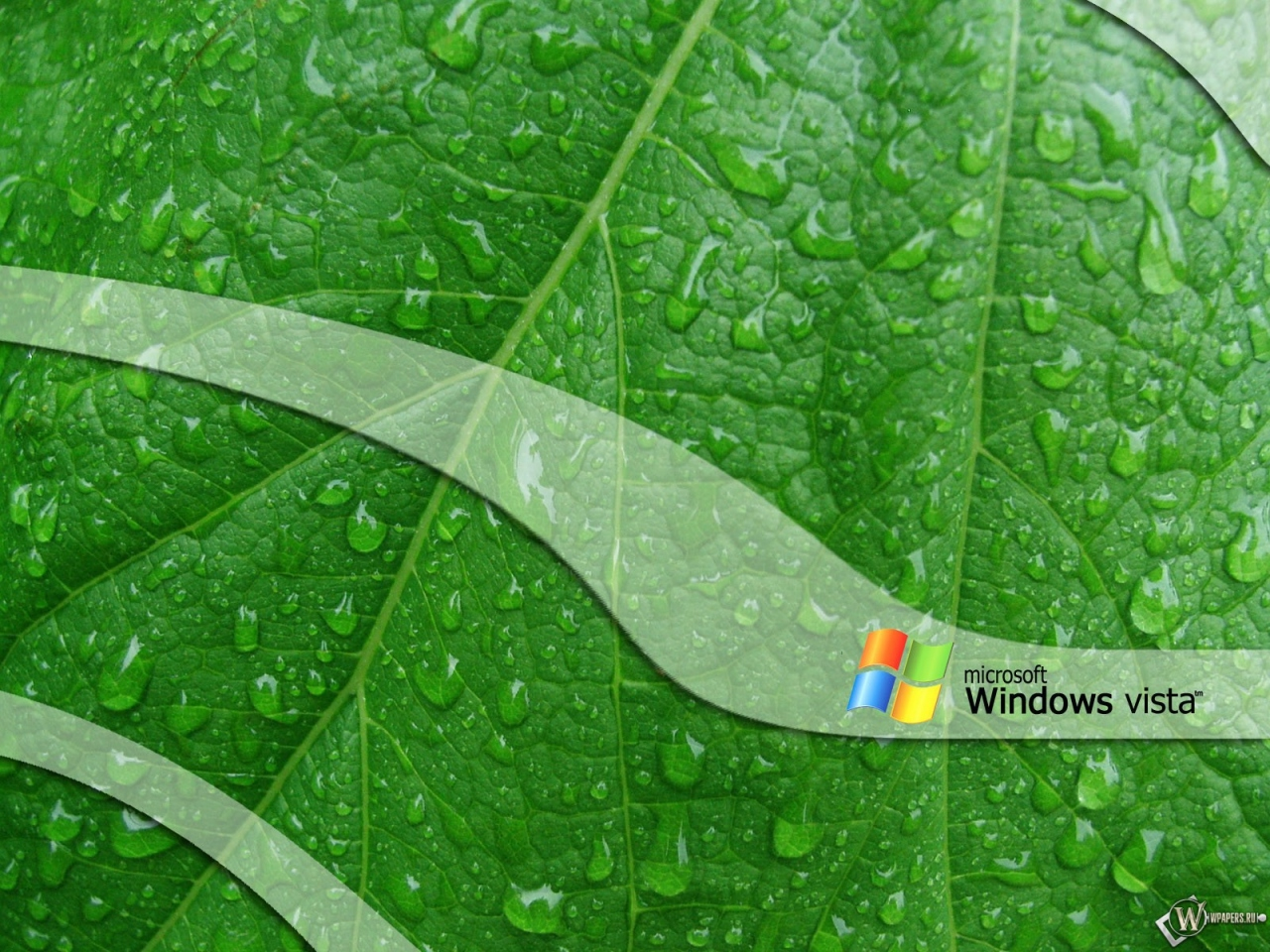 Обои vista лист лист windows vista 1280x960