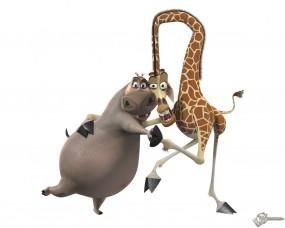 Обои Глория и мелман: Бегемот, Жираф, Мадагаскар, Мультфильмы