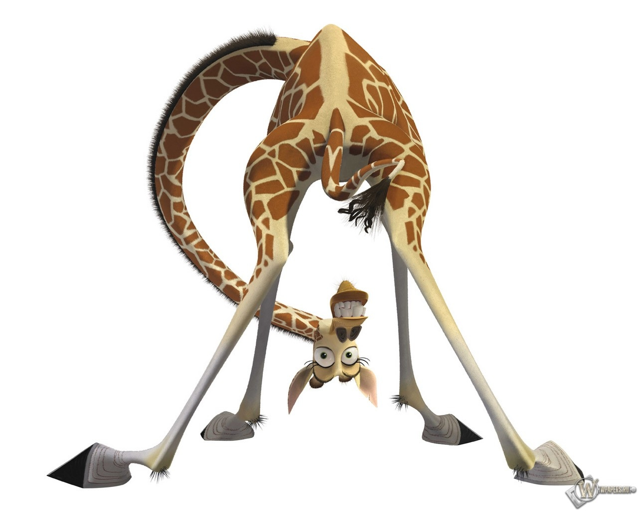 Обои жираф из мадагаскара на рабочий