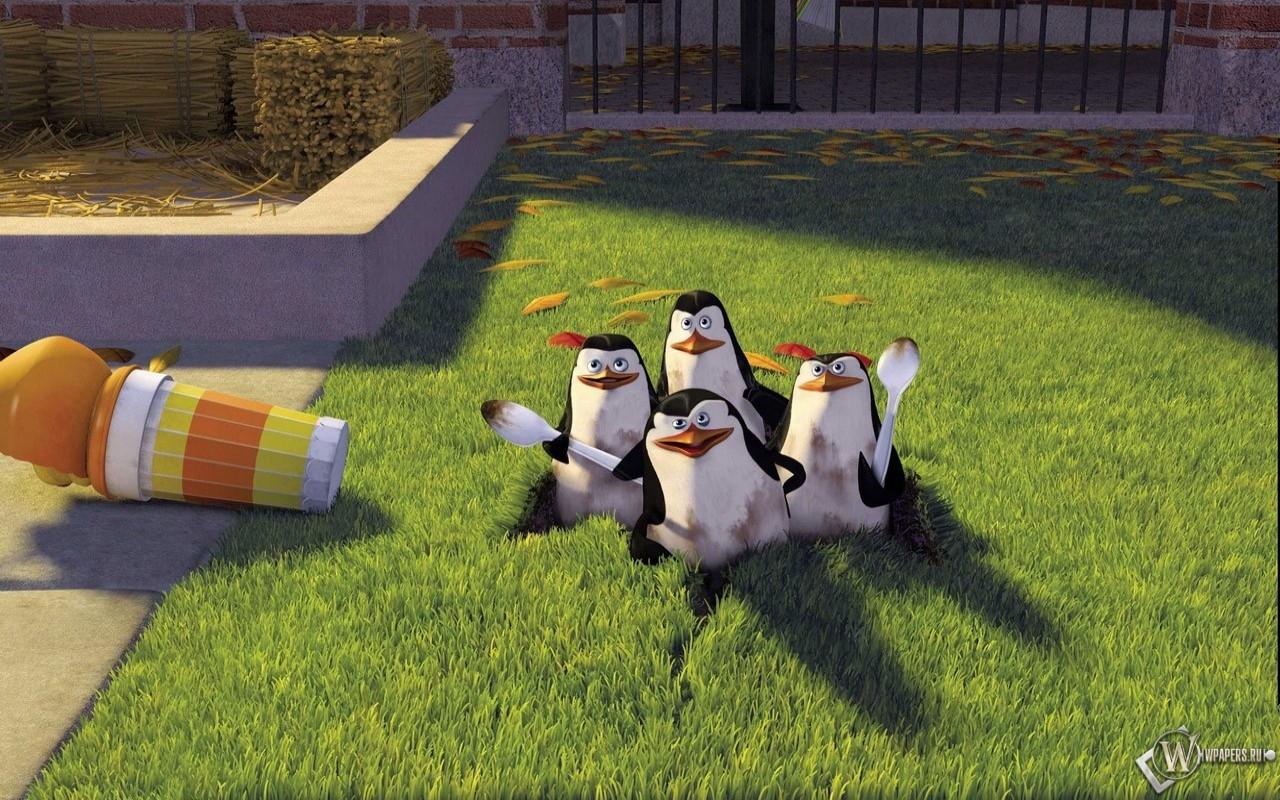 Пингвины из мадагаскара 1280x800