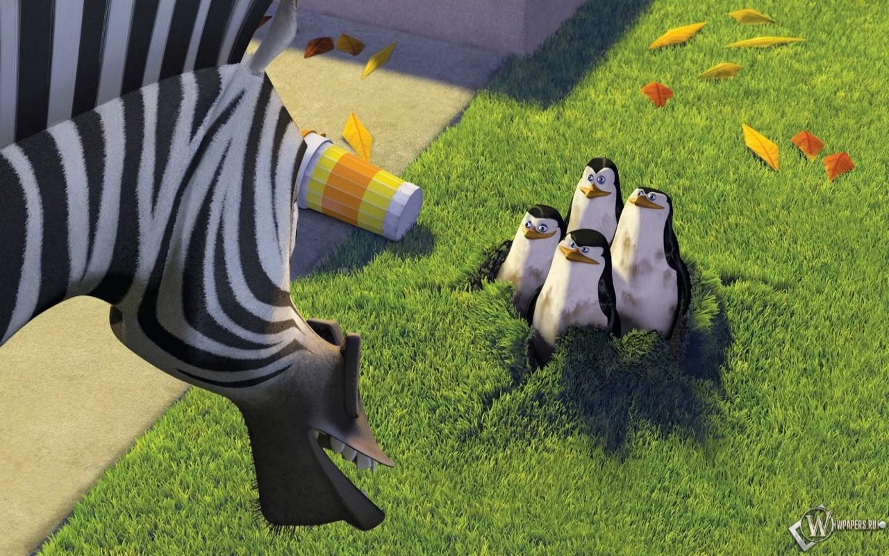 Пингвины в мадагаскаре 1280x800