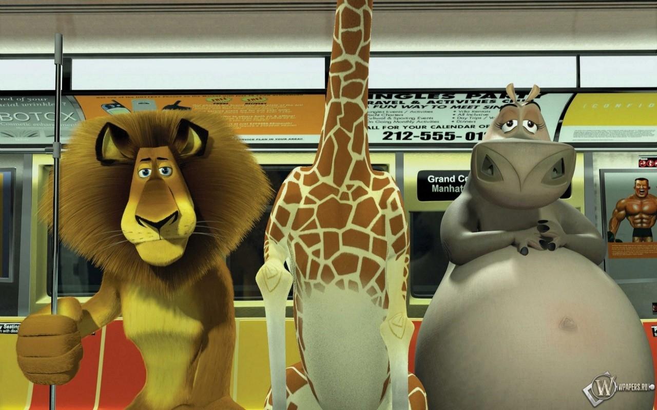 Мадагаскаровцы в метро