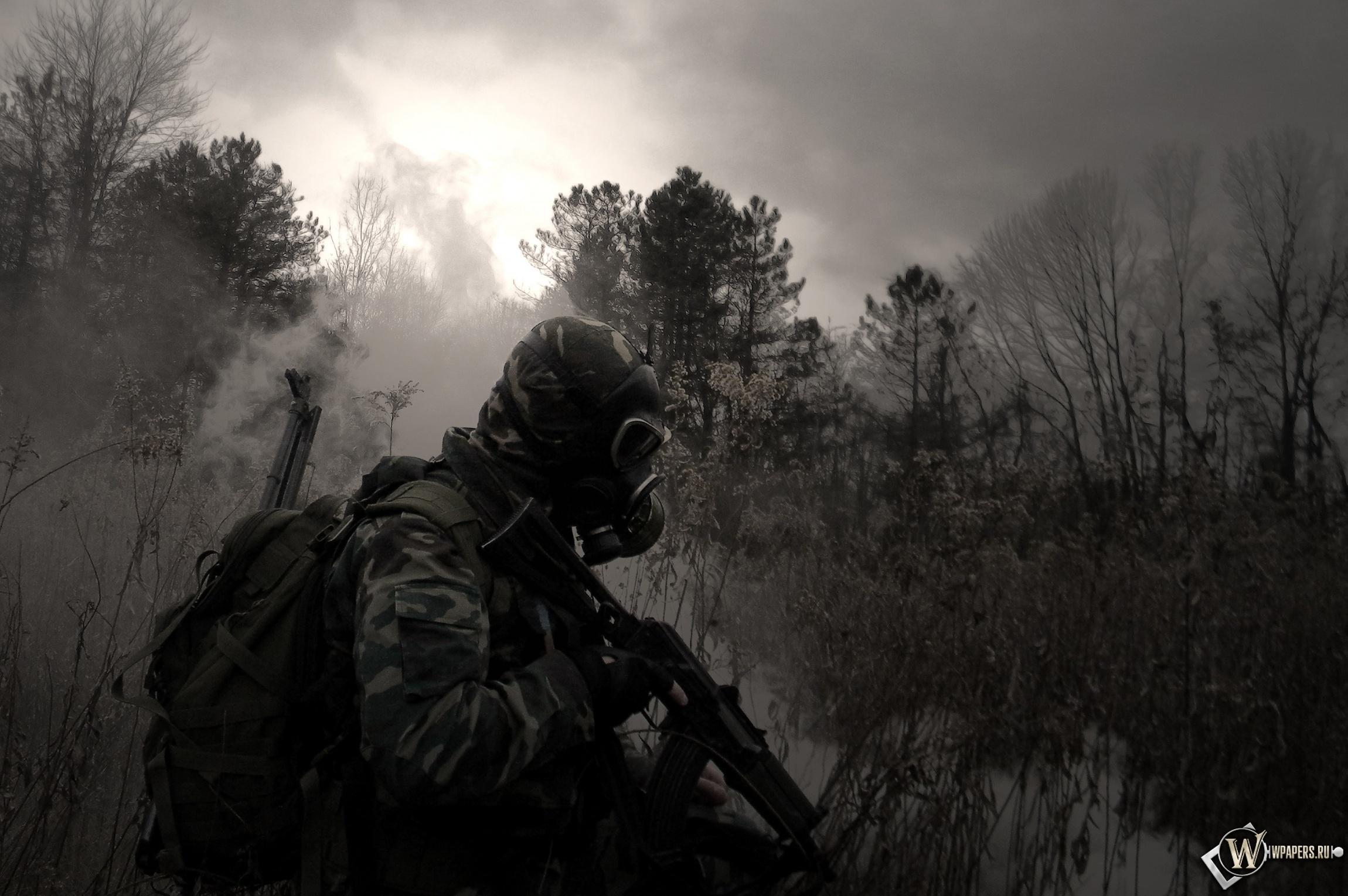 Обои stalker лес трава игра сталкер