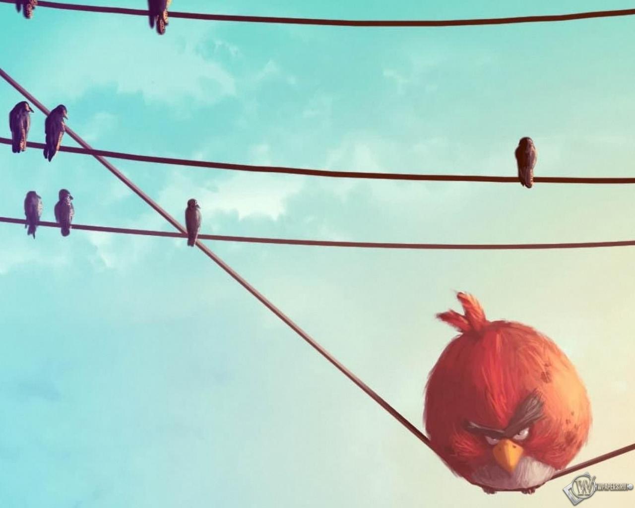 Angry birds злые птицы птицы обоев 23 angry birds