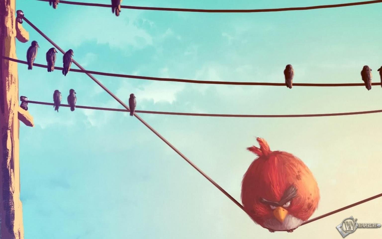 Обои angry birds злые птицы птицы angry birds
