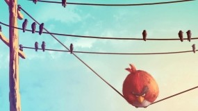 Обои Angry Birds - Злые Птицы: Птицы, Angry Birds, Другие игры