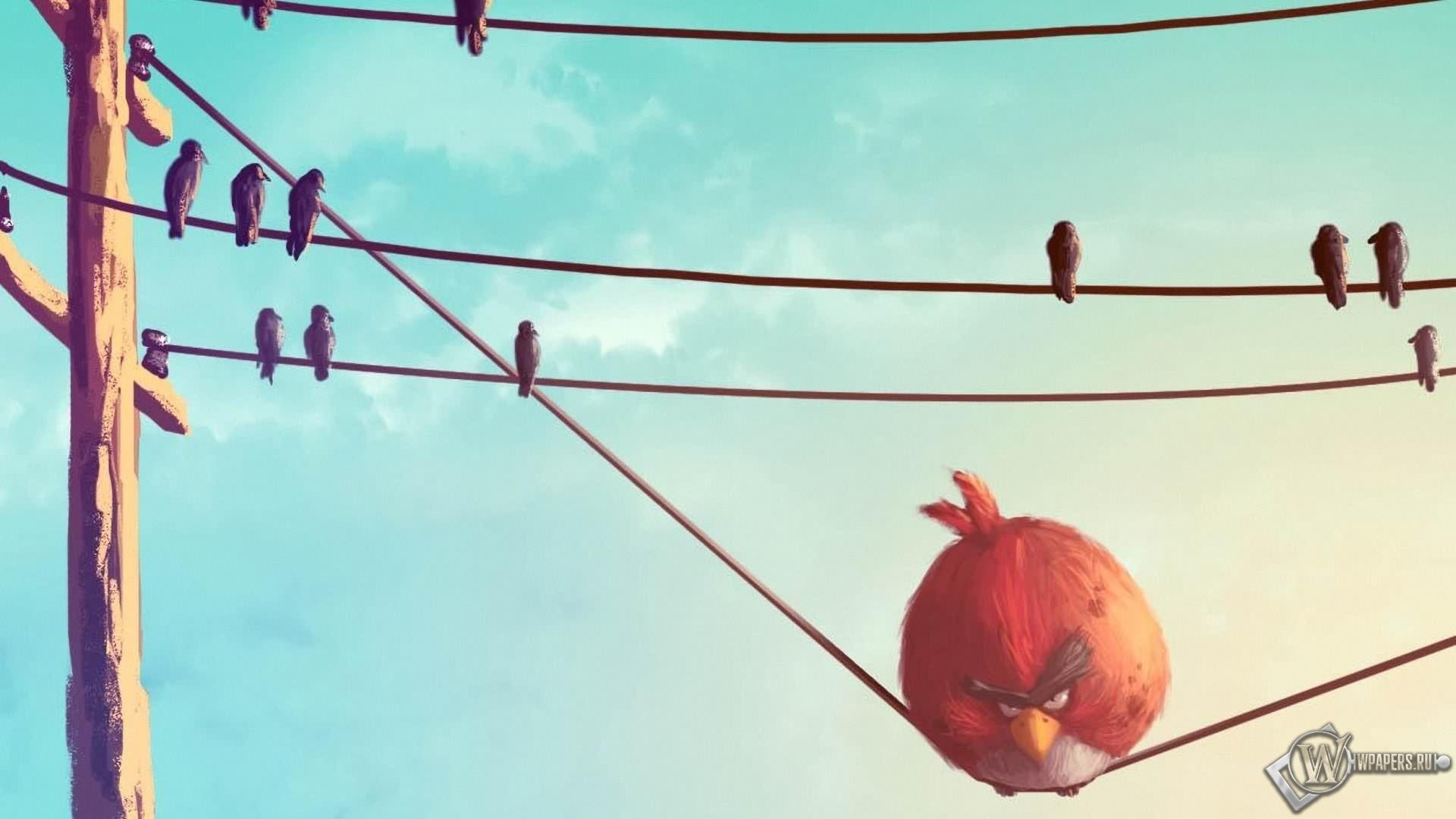 Birds злые птицы птицы обоев 23 angry birds