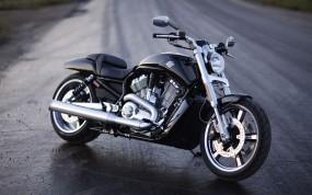 Обои Harley-Davidson V-Rod Muscle: Мотоцикл, Harley-Davidson, Мокрый асфальт, Мотоциклы
