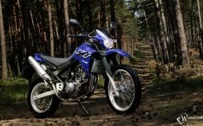 Обои Синяя ямаха в лесу: , Yamaha