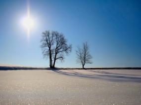 Обои Солнце и песок: Пустыня, Деревья, Солнце, Природа