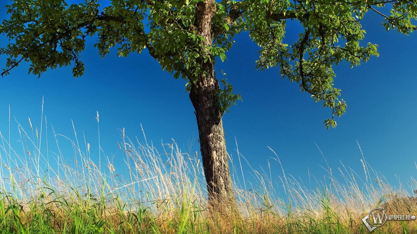 Фото дерева похожее на ясень