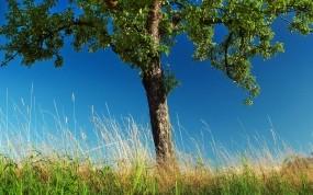 Обои Летнее дерево: Деревья, Природа, Фото, Дерево, Трава, Природа