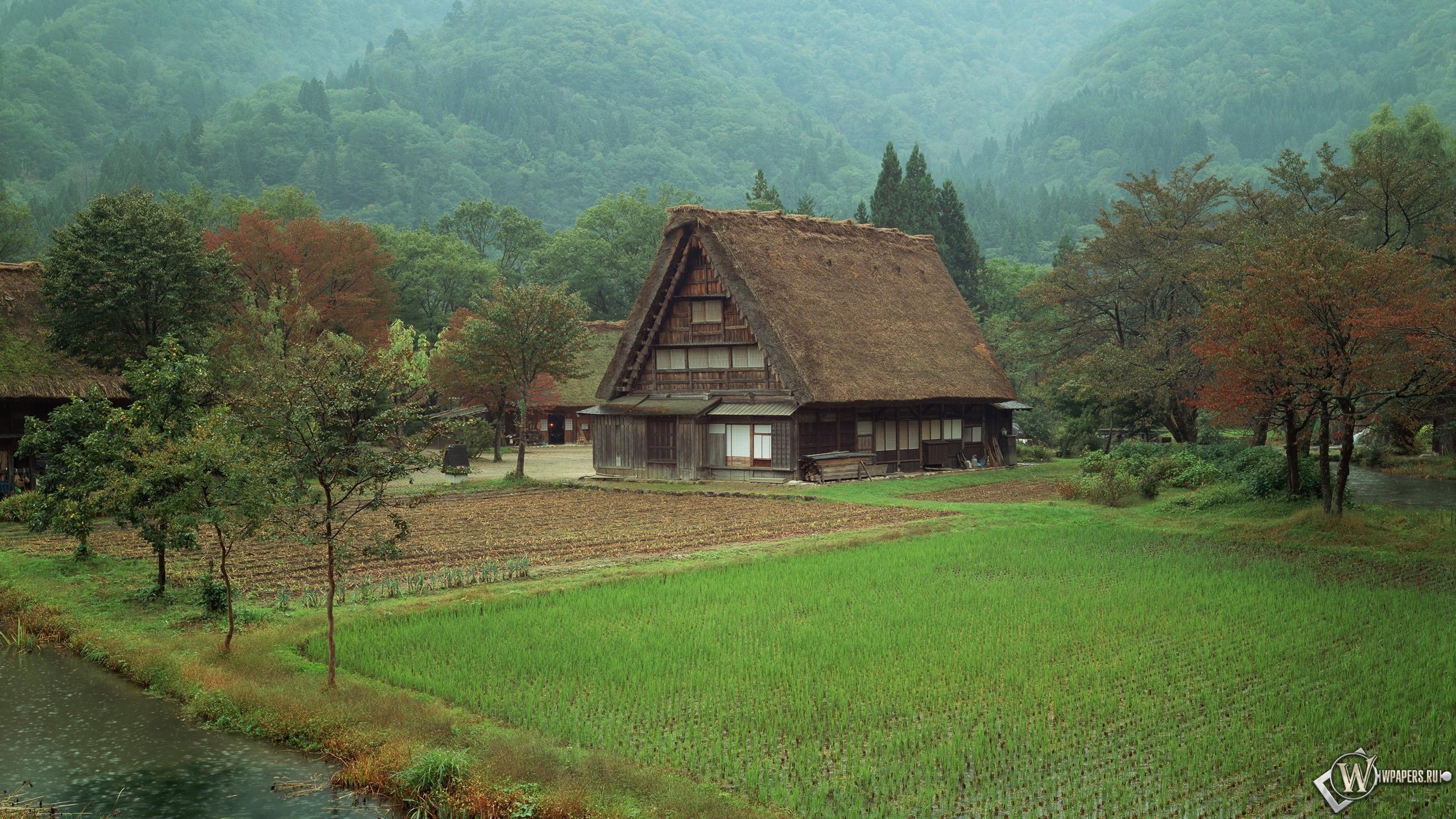 Обои дом в лесу лес поле дом 2560x1440