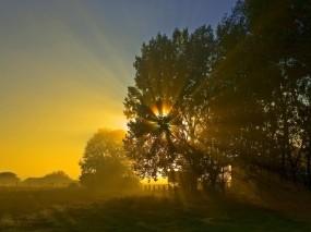Обои Последний день лета: Солнце, Ночь, Восход, Дерево, Природа