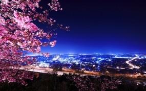 Обои Цветение вишни: Огни, Ночь, Здания, Природа