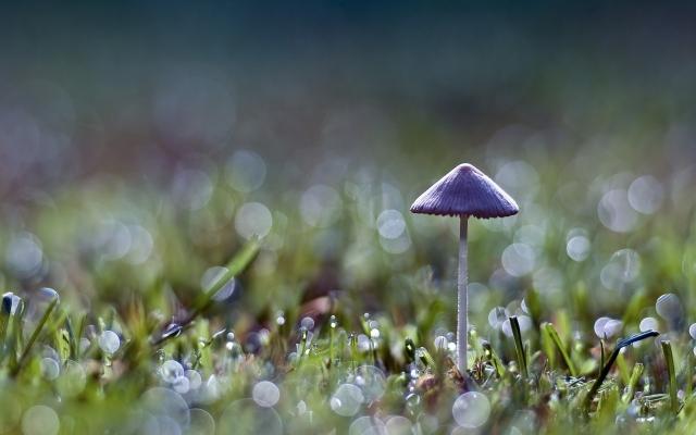 Серый гриб