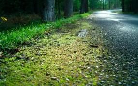 Обои Обочина дороги: Дорога, Лес, Мох, Трава, Природа