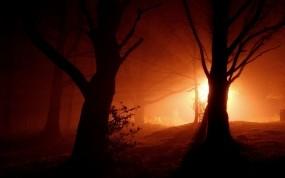 Обои Ночной лес: Огни, Свет, Деревья, Ночь, Пейзаж, Природа