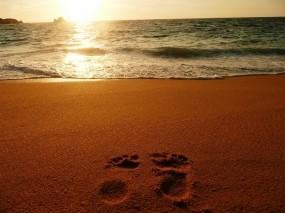 Обои Следы на песке: Песок, Море, Океан, Следы, Природа