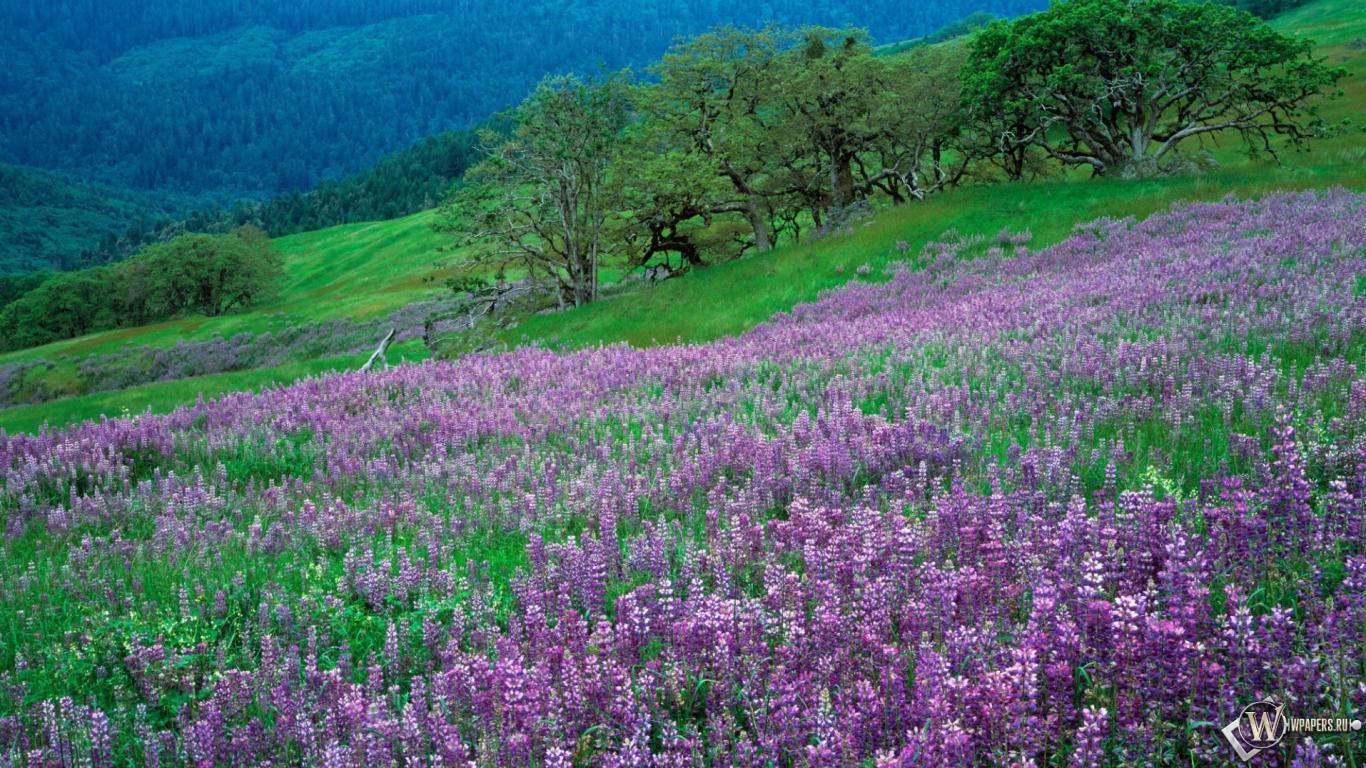 Картинки 1366х768 природа