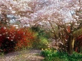 Обои Весенний сад: Цвета, Деревья, Кусты, Природа